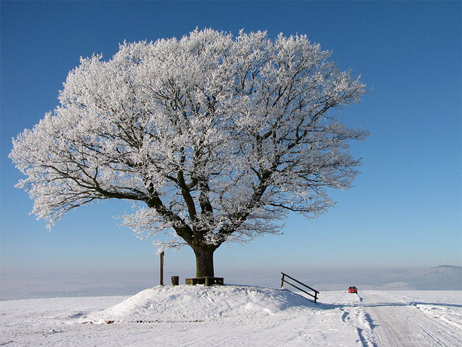 Winter_Trees_pictures_2