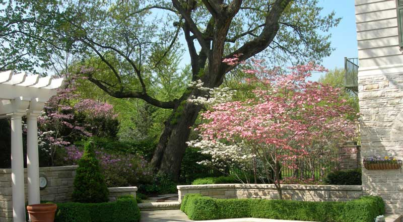 backyard landscaping with trees
